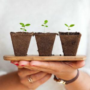 Plantjes helpen om CO2 op te nemen