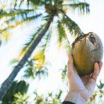Kokosnoot in hand