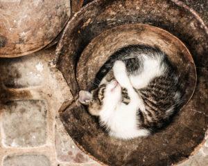 kattenfilmpjes kijken op je werk is goed voor je