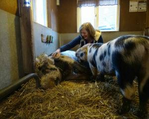 Judiths unieke hobby? Varkens en geiten borstelen op Stadsboerderij Zimmerhoeve.