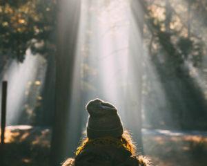 Recensie: Optimisme – Hoop – Veerkracht – Zelfvertrouwen