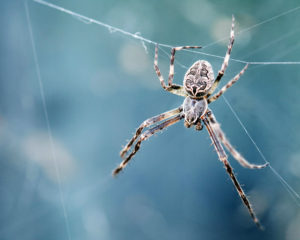 Dit is waarom jij bang bent voor spinnen en slangen